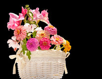 Flower basket against dark background Stock Image