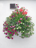 Flower Basket Against a Stucco Wall Royalty Free Stock Images