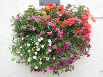 Flower Basket Against a Stucco Wall Royalty Free Stock Image