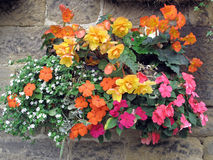 Flower Basket Attached to a Stone Wall. royalty free stock photography