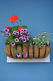 Flower basket on blue wall Royalty Free Stock Photo