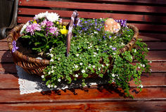Flower basket Stock Images