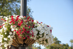 Flower basket on the light pole Stock Image