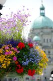 Flower basket  near building of Parliament. Of British Columbia Stock Images