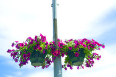 Flower basket on a post Stock Photo