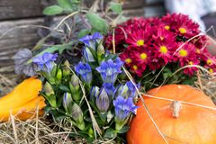 Flower basket with pumpkin royalty free stock images