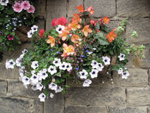Flower Basket Set Against a Stone Wall Royalty Free Stock Images
