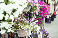Flower in basket of vintage bicycle on vintage wooden house wall, summer street cafe Stock Images