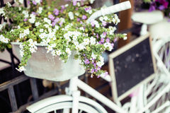 Flower in basket of vintage bicycle on vintage wooden house wall, summer street cafe Royalty Free Stock Photos