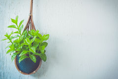 Flower in basket on wall Royalty Free Stock Photos
