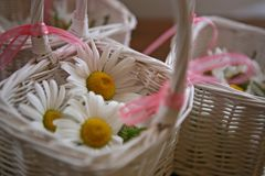 Flower basket with white flowers stock photo