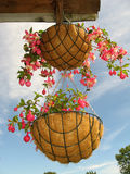 Flower baskets. Two hanging baskets with the flowers Stock Image