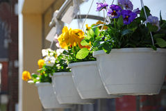 Flower baskets Royalty Free Stock Photos