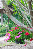 Flower baskets. Hanging flower baskets in the beautiful garden Stock Photography