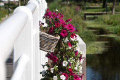 Flower baskets hanging on the railing of a bridge Stock Images