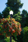 Flower Baskets on Lamp Post Stock Image