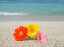 Flower on the beach Royalty Free Stock Photo