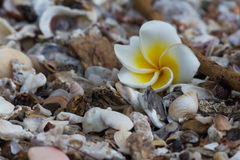 Flower on the beach. Flower and shell on the beach Stock Image