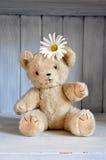 Flower bear Stock Images