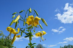 Flower. Beautiful flower against the sky Royalty Free Stock Photography