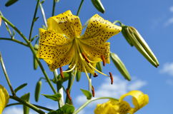 Flower. Beautiful flower against the sky Royalty Free Stock Images