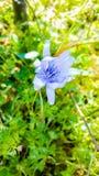 Flower. Beautiful flower background royalty free stock image