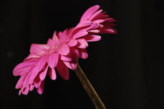 Flower beautiful color beauty art Royalty Free Stock Images