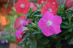 Flower. Beautiful and cute flowers in garden royalty free stock image