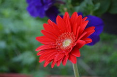 Flower. Beautiful and cute flowers in garden stock photo