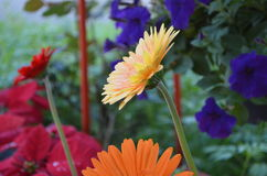 Flower. Beautiful and cute flowers in garden stock images