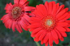 Flower. Beautiful and cute flowers in garden stock image