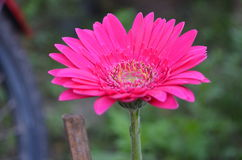 Flower. Beautiful and cute flowers in garden stock photography