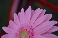 Flower. Beautiful and cute flowers in garden royalty free stock photos