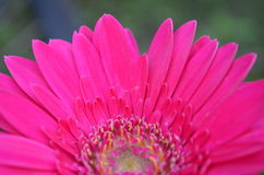 Flower. Beautiful and cute flowers in garden royalty free stock photography