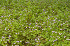 Flower. Beautiful flower on field background picture Royalty Free Stock Image