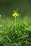 Flower. Beautiful flowers and grass on the ground Royalty Free Stock Photos