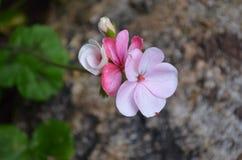 Flower. Beautiful fresh flower in garden royalty free stock images