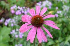 Flower. Beautiful fresh flower in garden royalty free stock photography