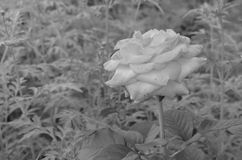 Flower. Beautiful fresh flower in garden stock photo