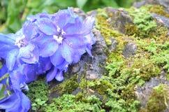 Flower. Beautiful fresh flower in garden stock photos