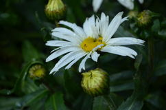 Flower. Beautiful fresh flower in garden royalty free stock photos