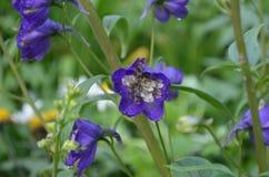Flower. Beautiful fresh flower in garden stock images