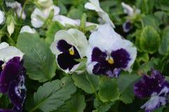 Flower. Beautiful fresh flower in garden stock photography