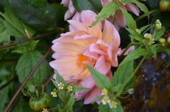 Flower. Beautiful fresh flower in garden stock image