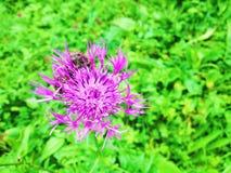 Flower. Beautiful flower of garden stock photos