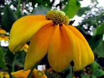 Flower. Beautiful Flower of the Garden in Mainau stock photography