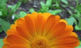 Flower. Beautiful Flower of the Garden in Mainau stock photos