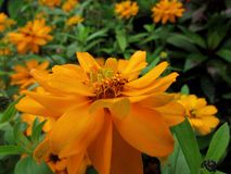 Flower. Beautiful Flower of the Garden in Mainau royalty free stock images