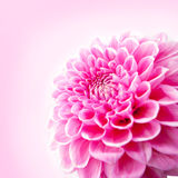 Flower and beautiful petals. Stock Images