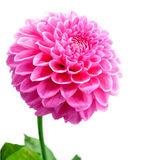 Flower and beautiful petals. Stock Photo